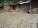 Drying coffe